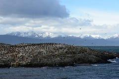 Colonia del cormorán en una isla en Ushuaia en el canal del beagle Foto de archivo