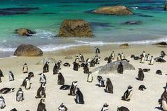 Colonia del pinguino dei massi fotografie stock libere da diritti