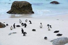 Colonia del pinguino fotografia stock