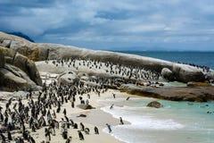 Colonia del pinguino sulla spiaggia dei massi, Sudafrica immagini stock libere da diritti