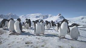 Colonia del primer de pingüinos de la Antártida en nieve metrajes