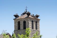 Colonia della cicogna bianca, cicconia di Cicconia fotografie stock libere da diritti
