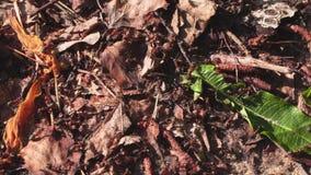 Colonia della formica un giorno di estate archivi video