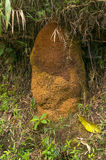 Colonia della termite Fotografia Stock