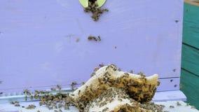 Colonia delle api che lavorano in un alveare archivi video