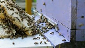 Colonia delle api che lavorano in un alveare stock footage
