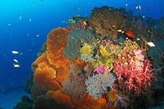 Colonia di corallo molle, isola Tailandia di Similan fotografie stock libere da diritti