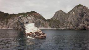 Colonia di corvi dei leoni marini di Steller vicino alla parte sudoccidentale della baia di Russkaya del golfo di Avacha del vide video d archivio