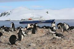 Colonia di corvi del pinguino di sottogola in Antartide Immagini Stock