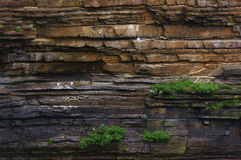 Colonia di uccelli su una parete della roccia Fotografie Stock