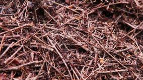 Colonia en el bosque - fondo de las hormigas del hormiguero almacen de metraje de vídeo