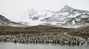 Colonia enorme del pingüino. Imagen de archivo