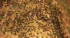Colonia móvil de las hormigas imagen de archivo libre de regalías