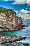 Colonia reale dell'albatro, NZ Fotografie Stock Libere da Diritti