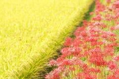 Colonia roja de la flor Foto de archivo libre de regalías