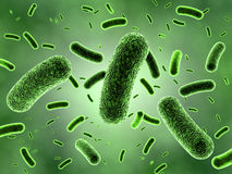 Colonia verde de las bacterias
