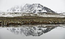 Colonia y montaña de rey pingüino reflejadas Imagen de archivo libre de regalías