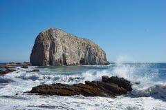 Colonias del ave marina en la costa de Chile Imagen de archivo