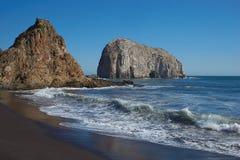 Colonias del ave marina en la costa de Chile Foto de archivo libre de regalías