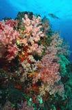 Colonie de corail molle, île de Similan photo stock