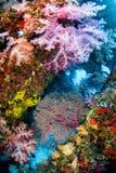Colonie de corail molle, île Thaïlande de Similan image stock