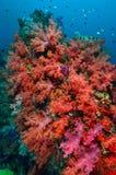 Colonie de corail molle photographie stock libre de droits
