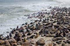 Colonie de joints de lion sur la côte sur l'Océan Atlantique images libres de droits