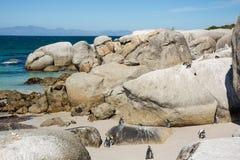 Colonie de penquin de rochers chez Simonstown Image stock