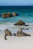 Colonie de penquin de rochers chez Simonstown Photographie stock libre de droits