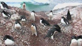 Colonie de pingouin d'Adelie sur une île près de la péninsule antarctique banque de vidéos