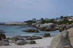 Colonie de pingouin de plage de rochers Images libres de droits