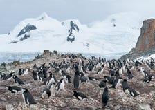 Colonie de pingouin de jugulaire d'emboîtement, île de demi-lune, péninsule antarctique image libre de droits