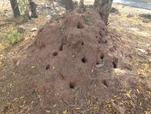 Colonie de termite Photo stock
