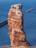 Colonie del pájaro en la isla costera Helgoland Imagenes de archivo