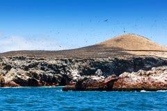 Colonie des cormorans sur l'île Images libres de droits