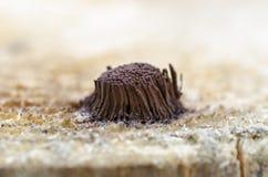 Colonie des moules de boue photographie stock libre de droits