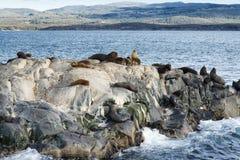 Colonie des otaries se reposant sur une petite île sur la Manche de briquet, Tierra Del Fuego Photographie stock libre de droits