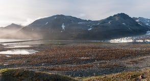 Colonie des poussins du Roi Penguin devant Ross Glacier, St Andrews Bay, la Géorgie du sud images libres de droits