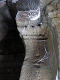 Colonna del tempio di Angkor Wat Fotografia Stock