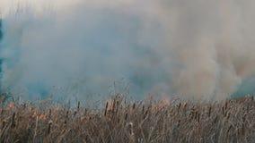 Colonna di fumo enorme da un fuoco elementare nella steppa della foresta, nei cespugli di combustione e nell'erba asciutta stock footage