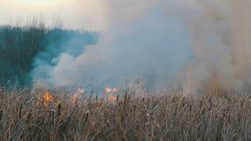 Colonna di fumo enorme da un fuoco elementare nella steppa della foresta, nei cespugli di combustione e nell'erba asciutta video d archivio