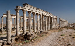 Colonnade in Apamea. Ancient and one of the most largest colonnade in Apamea, Syria royalty free stock photos