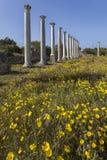 Colonnade dans les ruines des salamis Photos libres de droits