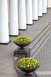 Colonnade and flower pots Stock Image