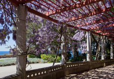 Colonnade in the Garden of the Miramare Castle Park in Trieste. Colonnade covered in flowering vine in the garden of the park of the Miramare castle in Trieste Royalty Free Stock Images