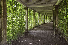 Colonnade with the old columns covered with ivy Royalty Free Stock Photo