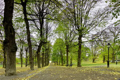 Colonnade van lindebomen in het park royalty-vrije stock foto