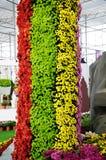 Colonne del crisantemo Immagini Stock Libere da Diritti