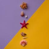Colonne des coquillages dans vif Photo libre de droits