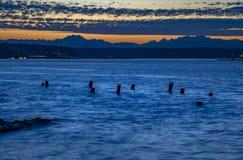 colonne di legno abbandonate nella baia di Tacoma Immagine Stock